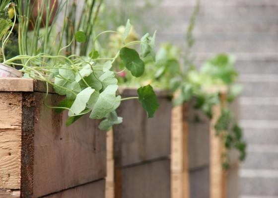 urban-gardening-pflanzkasten