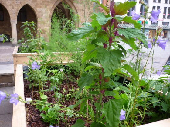 urban-gardening-pflanzkasten2